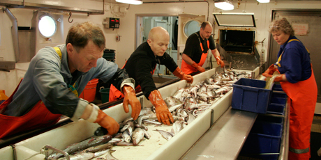 The wet fish laboratory on-board the research vessel Dana. Photo: Line Reeh