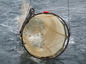 "The herring larvae surveys are carried out with a so-called ""MIK net"", a 2 meter diameter ring frame with a large fine-meshed net. Photo Bastian Huwer."